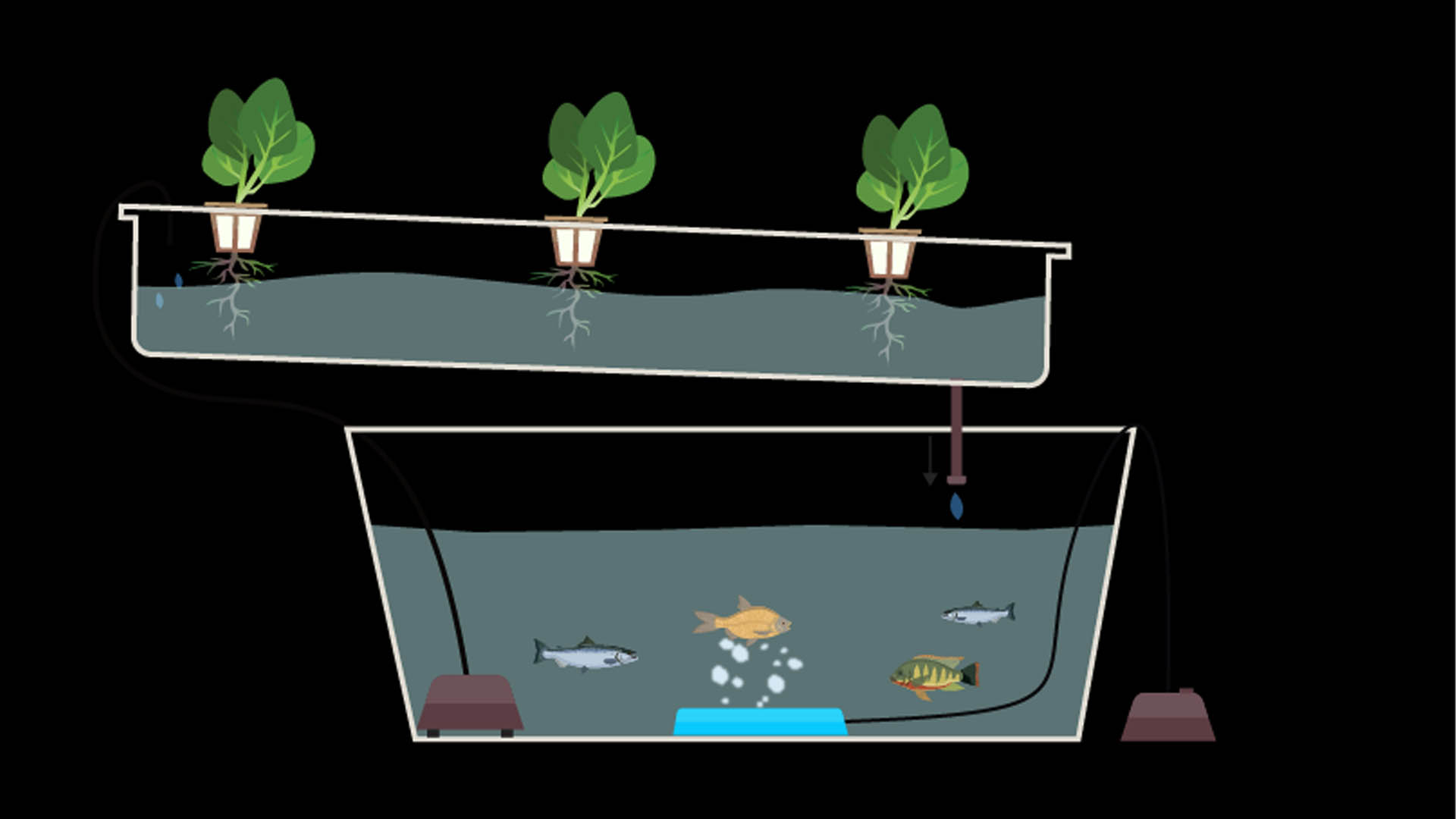 Example of an Aquaponic project which can be done